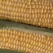 Corn On Cob — Stock Photo #2124206