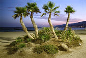 Palm Trees and Beach at Sunset — Stock Photo