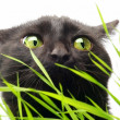 Cat & Grass — Stock Photo