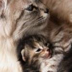Cat and her kitten hugs — Stock Photo #2184912