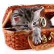 Stock Photo: Kitten in basket