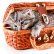 Kitten in basket — Stock Photo