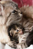 Cat and her kitten hugs — Stock Photo