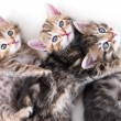 Kittens lays - white background — Stock Photo