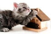 Kitten has real estate - isolated — Stock Photo