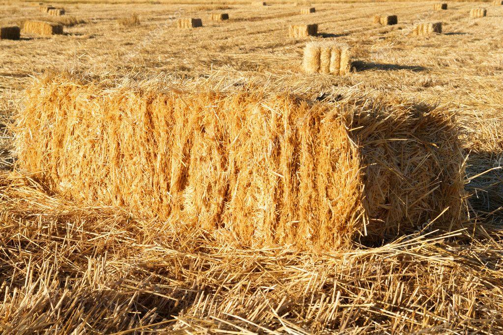 Фермеры Херсонщины сжигают потенциальную прибыль