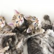 Kittens lays - white background — Stock Photo #2225311
