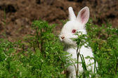 Cute white rabbit hides in meadow — Stock Photo