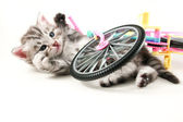 Kitten fallen bicycle — Stock Photo