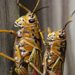 Mystery insects for all over the World — Stock Photo