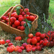Stock Photo: Abundant Harvest of Fruit