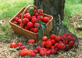 Abundant Harvest of Fruit — Стоковое фото