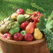 Abundant Harvest of Fruit — Foto Stock