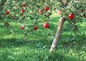 Abundant Harvest of Fruit — Stock Photo