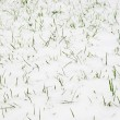 Grass & snow — Stock Photo