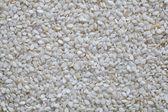 Sesame seeds close up, texture — Stock Photo