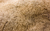 Wool of the bison — Stock Photo