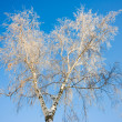 Tree in snow — Stock Photo #2000991