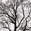Stock Photo: Branches of a tree