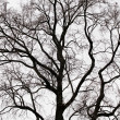 Branches of tree — Stock Photo #2002157