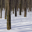 Winter forest — Stock Photo #2006588