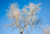 Tree in a snow — Stock Photo