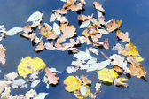 Floating leaves — Stock Photo