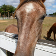 Horse closeup — Stock Photo