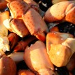 crab claws — Stock Photo