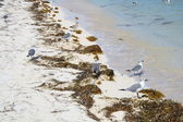 Birds on the beach — Foto Stock