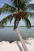 Tropical tree by the sea — Stock Photo