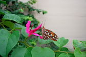Butterfly on the garden — Стоковое фото