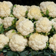 Royalty-Free Stock Photo: Cauliflower