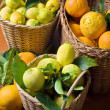 Citrus harvest - Stock Photo