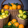 Harvest of citrus — Stock Photo
