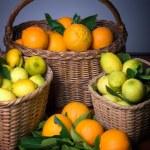 Harvest of citrus — Stock Photo