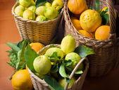 Урожай цитрусовых — Стоковое фото