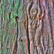 Stock Photo: Old tree bark