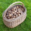 Royalty-Free Stock Photo: Basket of Walnut