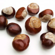 Wild chestnut - Stock Photo