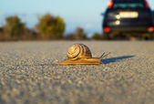 Snail's step — Stock Photo