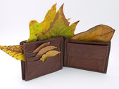 Wallet in the Autumn — Stock Photo