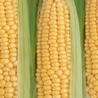 Stock Photo: Maize
