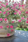 Beautiful flowerpot — Stock Photo