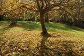 Autumnal park — Stock Photo