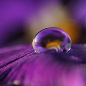 Violet drop — Stock Photo