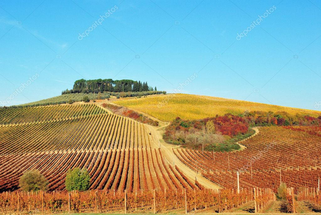 Tipycal Tuscan landscape with hills, vineyards, cypresses during the autumn — Stock Photo #2131587
