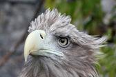 Head of a bird with the curve beak — Stock Photo