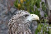 Head of a bird with the big beak — Stock Photo