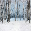 Birches in winter wood — Stock Photo